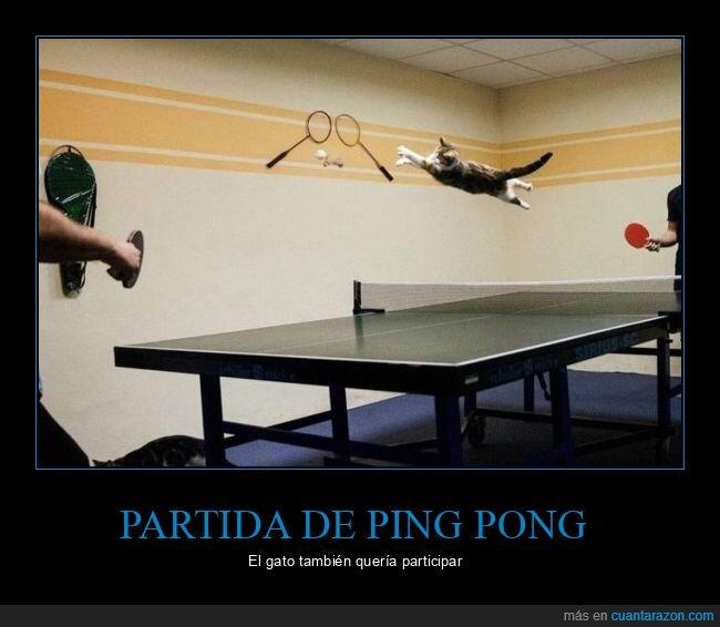 gato,ping pong,wtf