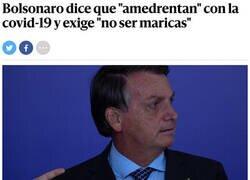 Enlace a Bolsonaro en su línea