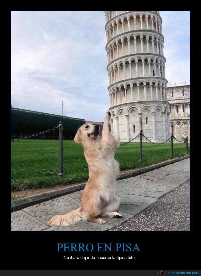 perro,torre de pisa