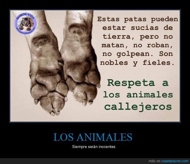 animales,inocentes,patas