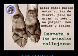 Enlace a Inocencia animal
