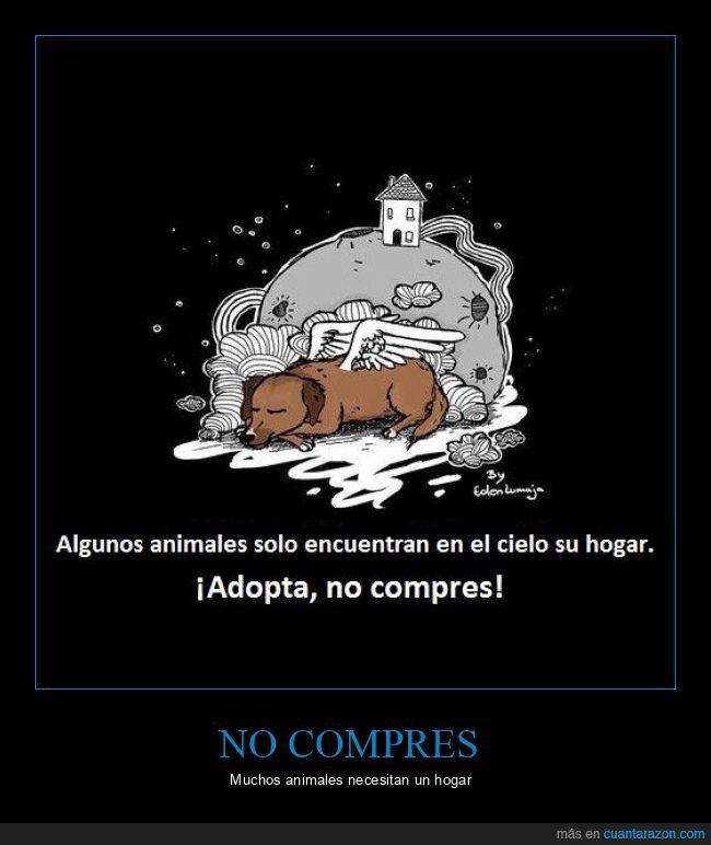 adoptar,animales,comprar