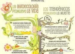 Enlace a Agroecología VS Transgénicos