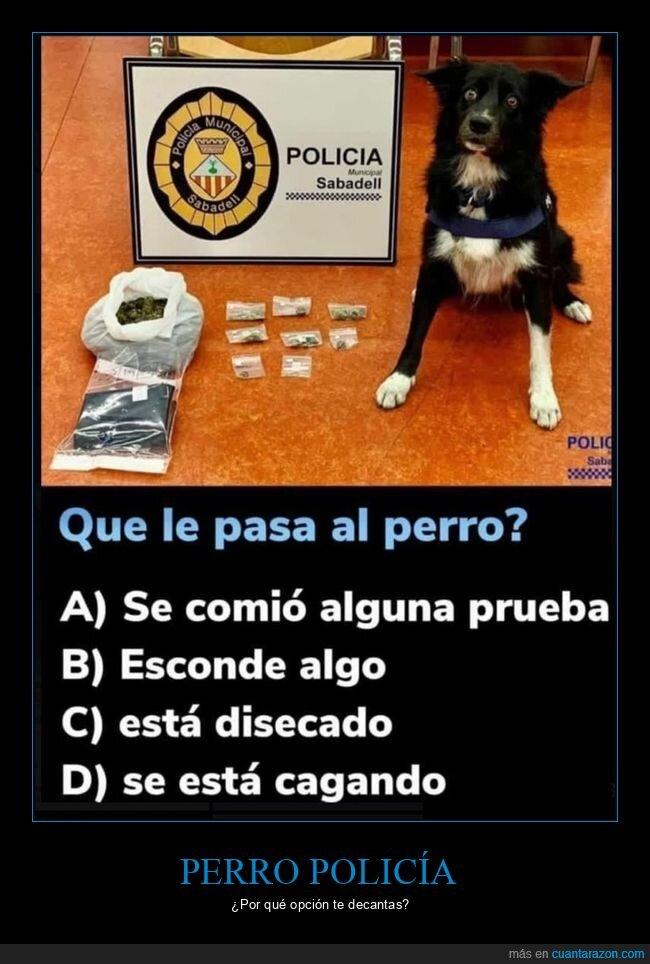 incautación,perros,policía