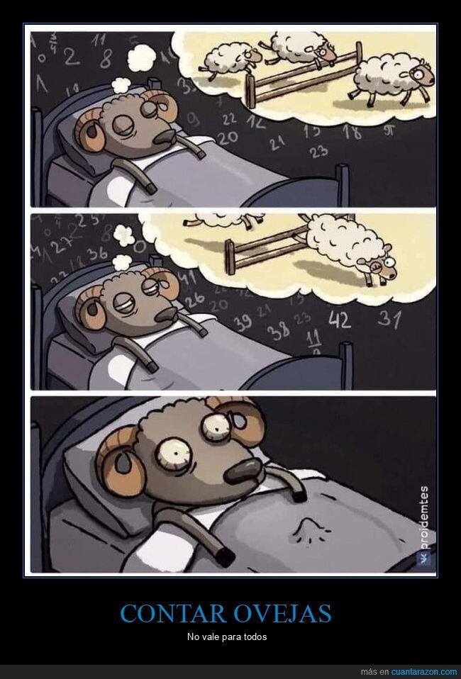 dormir,ovejas
