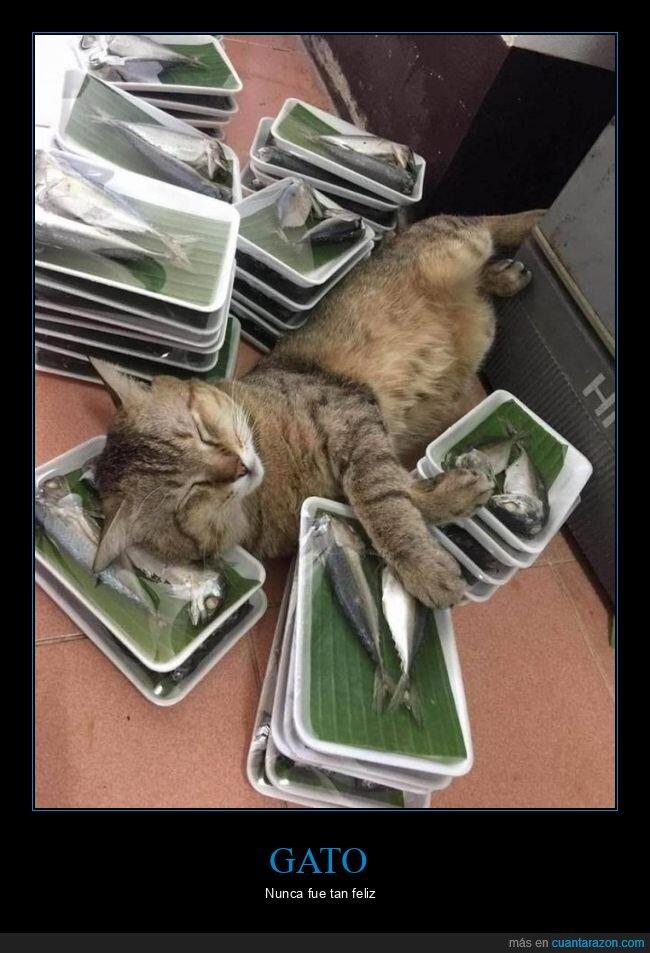 durmiendo,gato,pescado