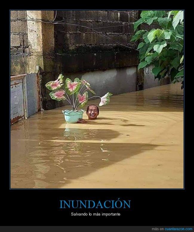 inundación,planta,salvando