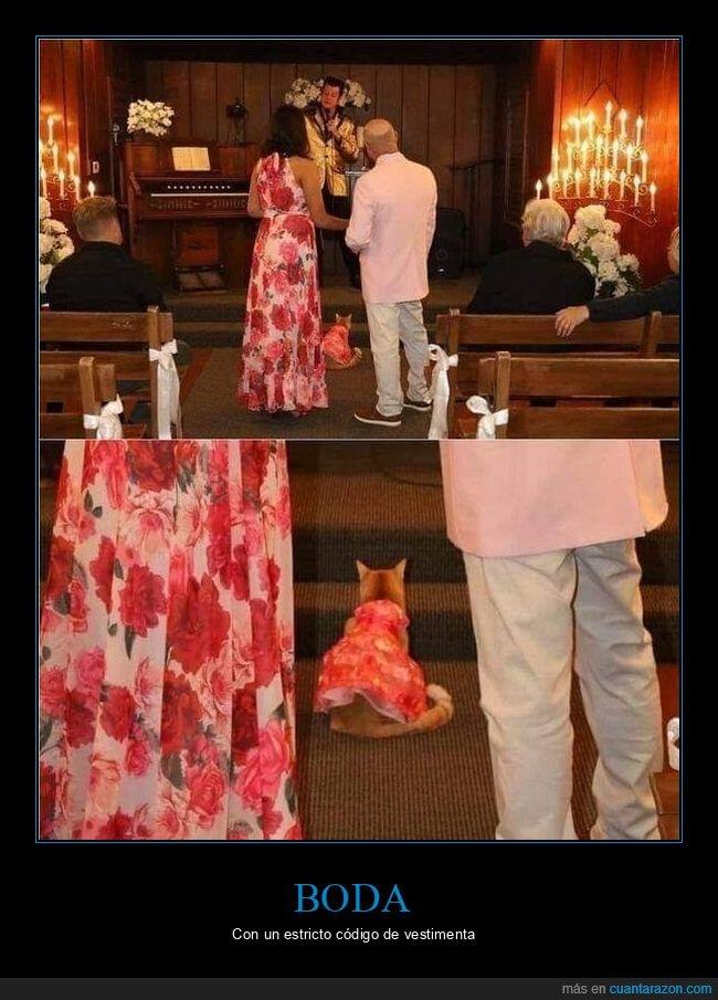 boda,gato,ropa
