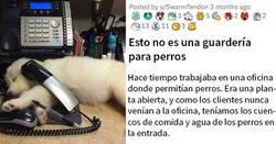 Enlace a Durante meses, una mujer dejó a su perro en esta oficina pensando que era una guardería para perros