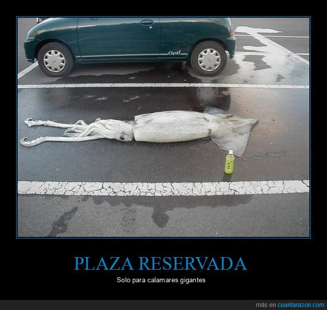 calamar,parking,wtf