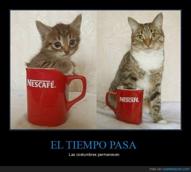 gato,taza