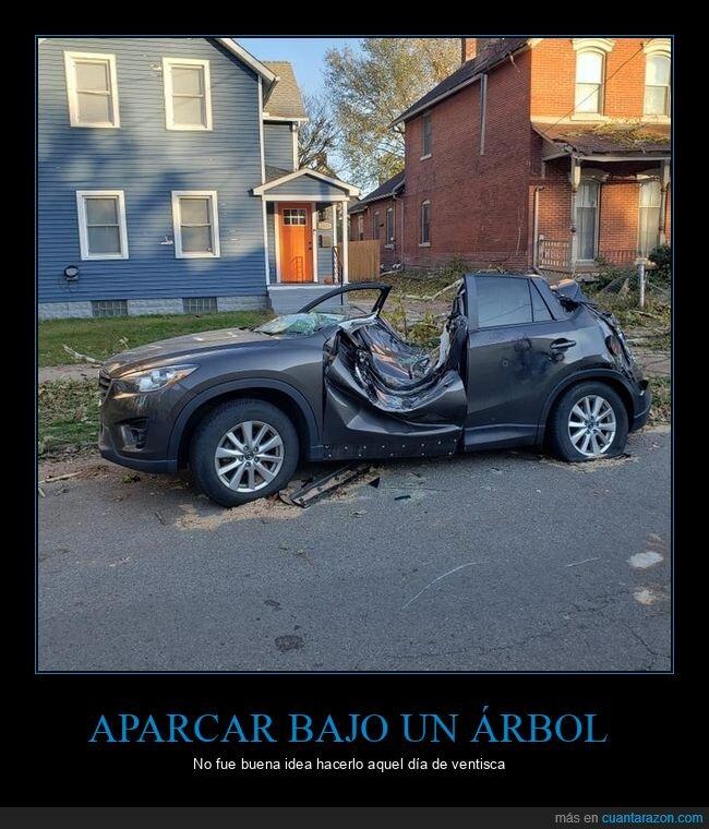 aparcar,árbol,coche,fails,viento