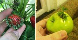 Enlace a Esto es lo que les pasa a las frutas y verduras cuando germinan antes de tiempo