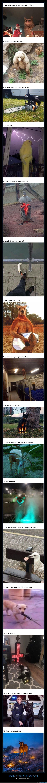 animales,malvados