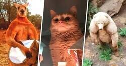 Enlace a Imágenes que demuestran que los animales planean dominar el mundo