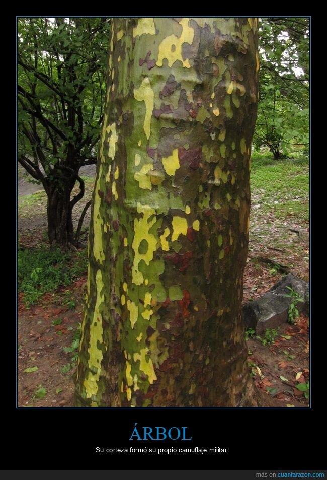 árbol,camuflaje,corteza