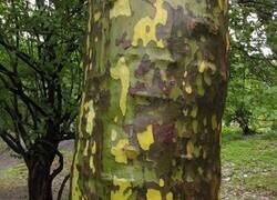 Enlace a Árbol camuflado