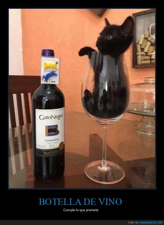 botella,copa,gato,negro,vino