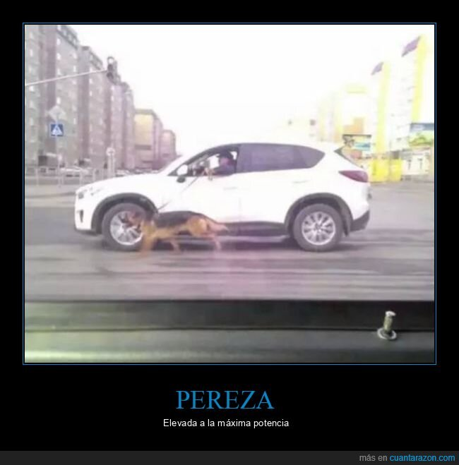 coche,paseando,pereza,perro