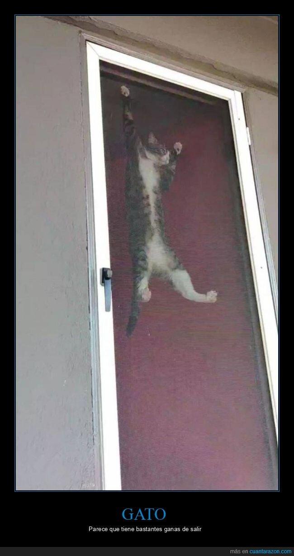gato,puerta,salir,wtf
