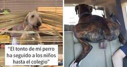 Enlace a Divertidas mascotas que fueron avergonzadas por portarse mal