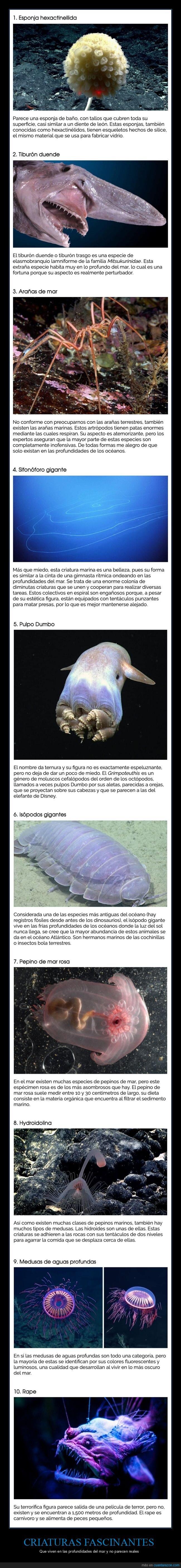 criaturas,mar,profundidades