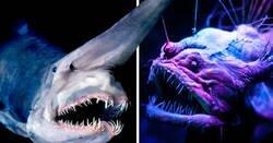 Enlace a Criaturas fascinantes que viven en las profundidades del mar y no parecen reales