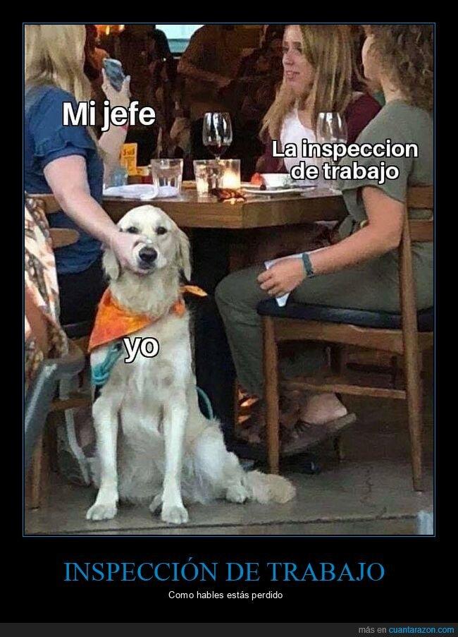 inspección de trabajo,jefe,perros