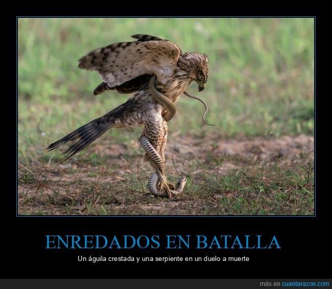 águila,enredados,serpiente