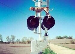Enlace a Perro desubicado