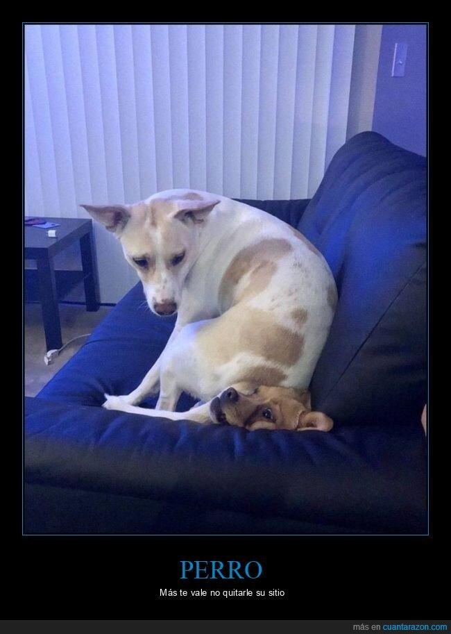 encima,perro,sentado,sofá