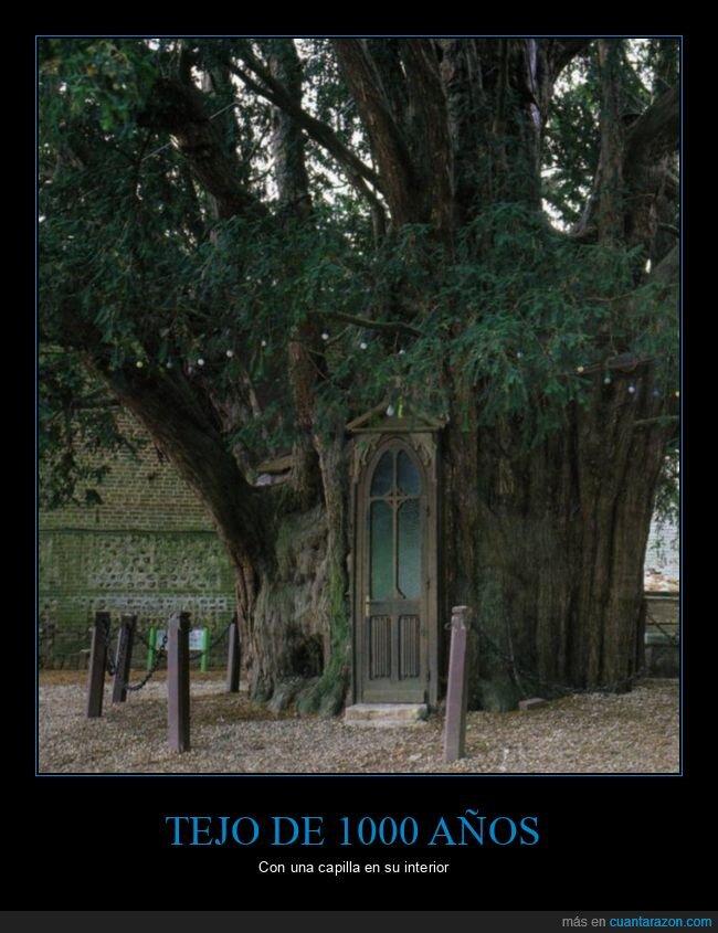 1000 años,árbol,capilla,tejo