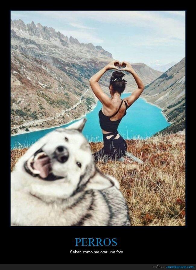 perro,photobomb