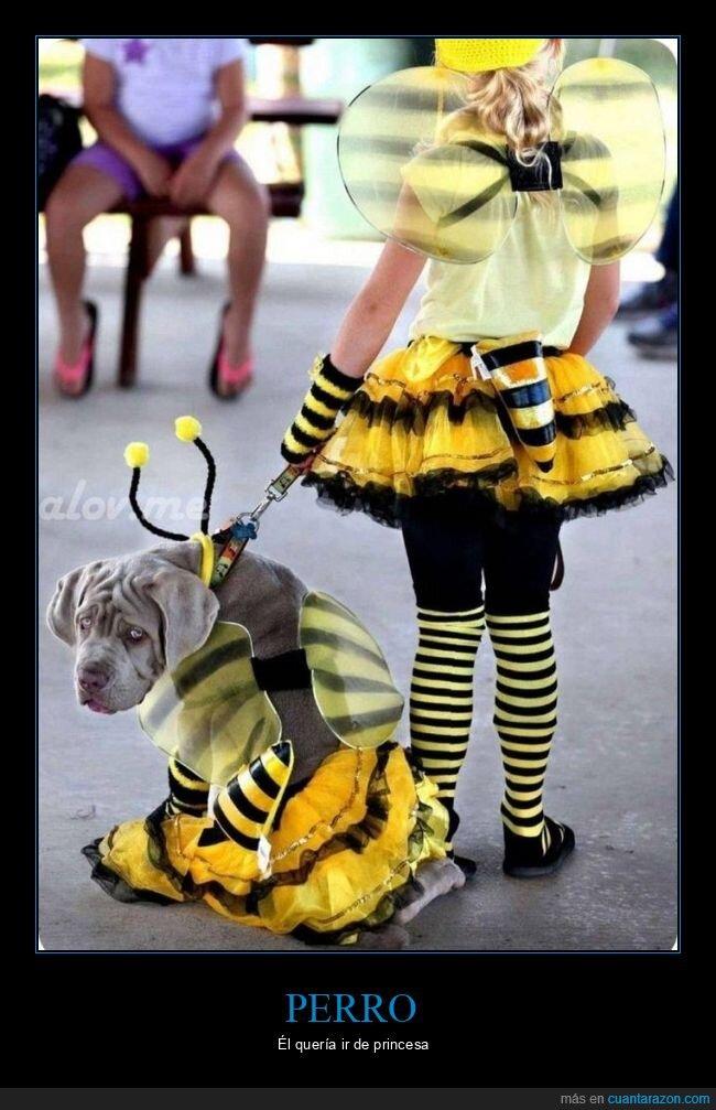abeja,disfraz,perro