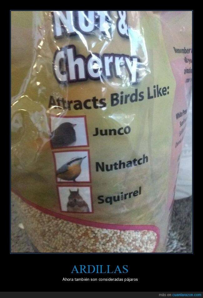 ardillas,fails,pájaros