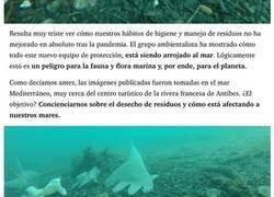 Enlace a La vergonzosa consecuencia de la pandemia: el mar está lleno de mascarillas y guantes