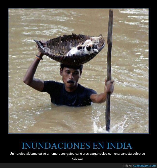 gatos,india,inundaciones,salvar