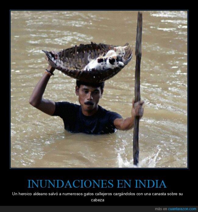 gatos,india,inundaciones,salvar