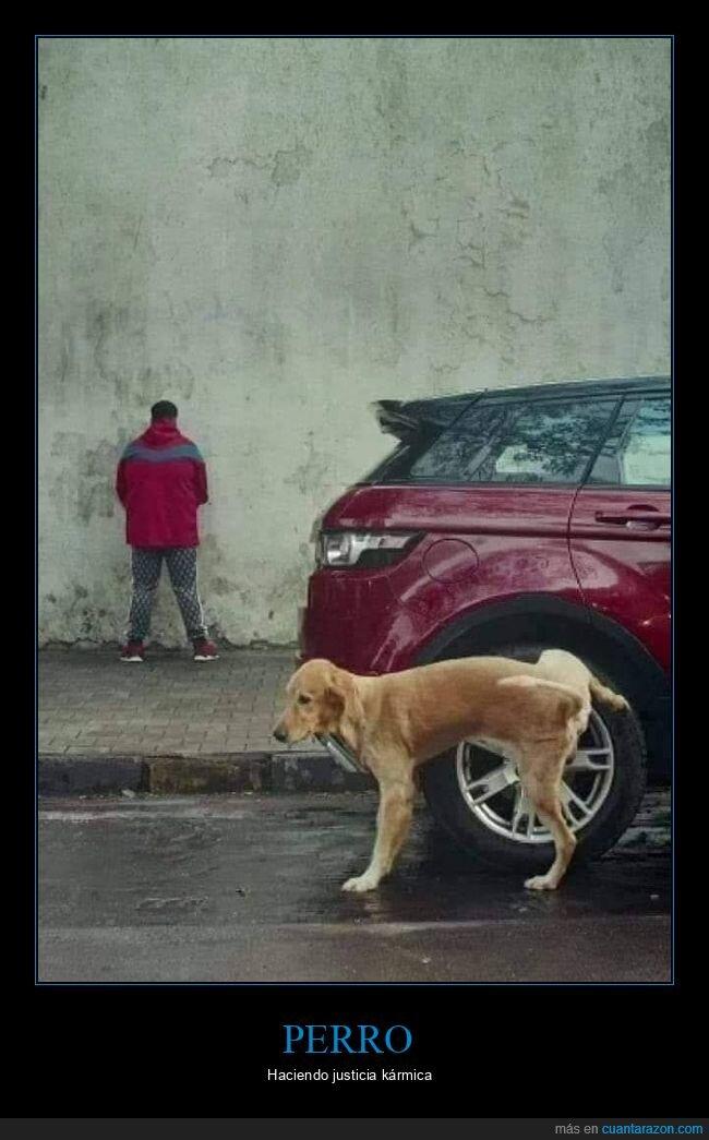 coche,meando,perro