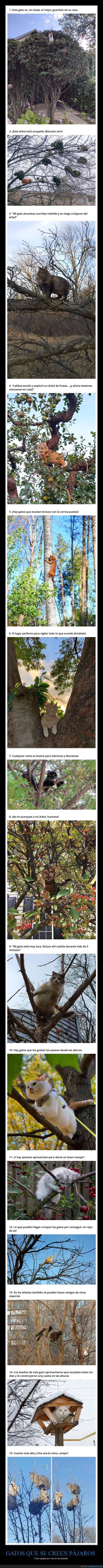 árboles,gatos,pájaros