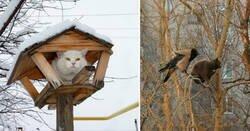 Enlace a Gatos que se creen pájaros y han optado por vivir en los árboles