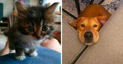Enlace a Fotos muy reconfortantes de mascotas rescatadas en el mes de Noviembre