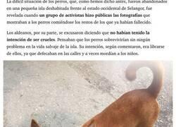 Enlace a En 2009 abandonaron a 300 perros en una isla desierta, os contamos cómo viven a día de hoy