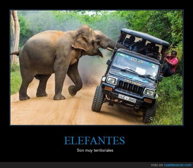 coche,elefante,wtf