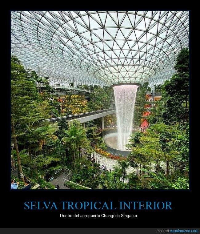 aeropuerto,interior,selva,singapur