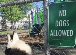 Enlace a Indignación canina