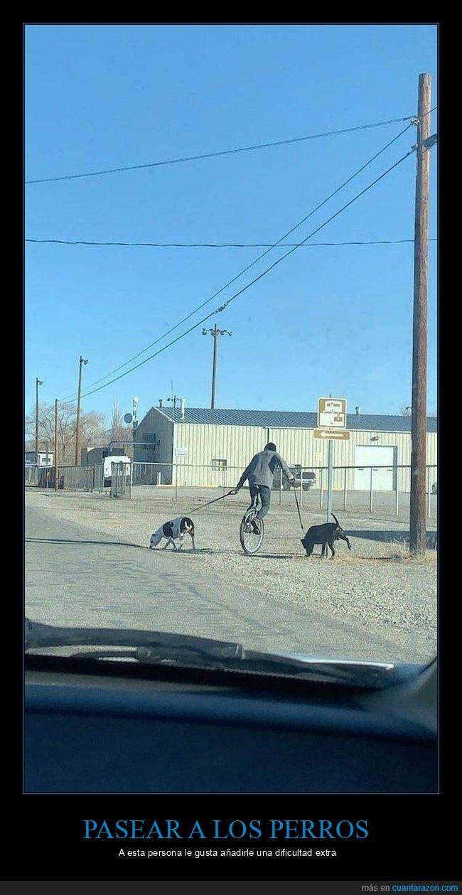 monociclo,perros,wtf