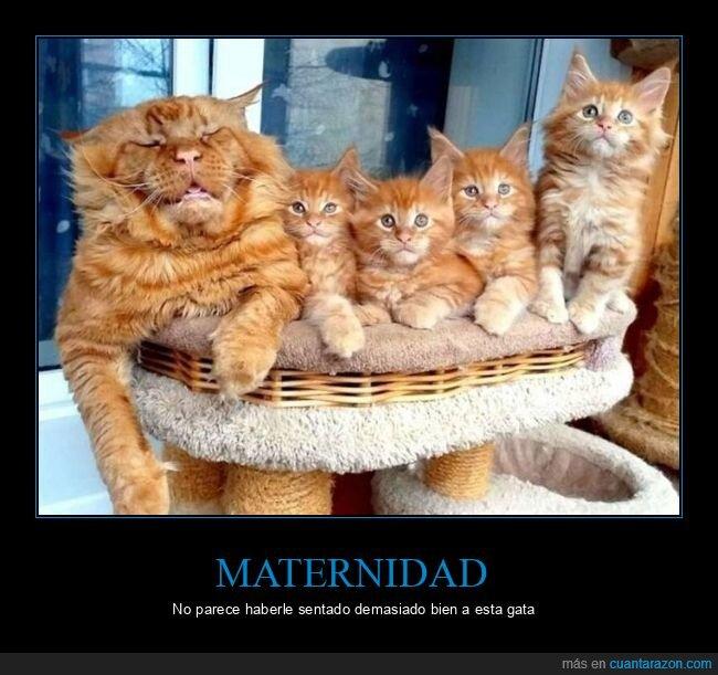 gatos,hijos,maternidad