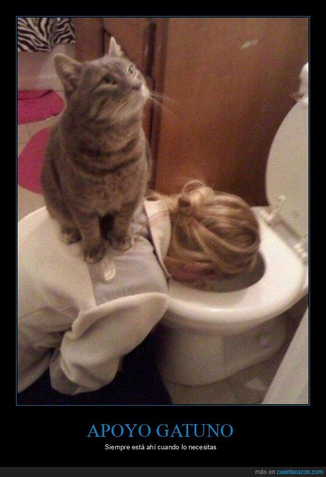 gato,váter,vomitando