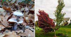 Enlace a Fotos de la naturaleza que suelen pasar desapercibidas pero son sorprendentes